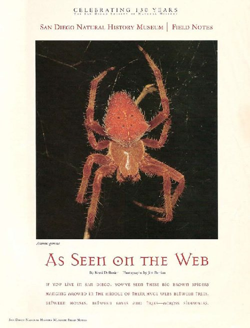 Spiders! An article in San Diego Natural Museum's Field Notes